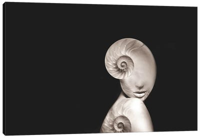 Shell II Canvas Art Print