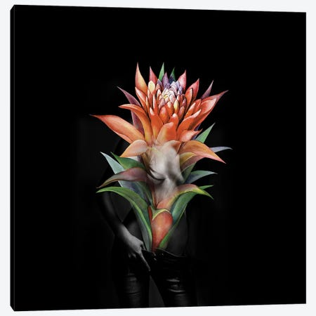 Guzmania Flower Canvas Print #AMR83} by Tatiana Amrein Canvas Wall Art