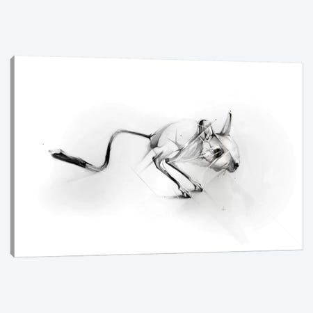 Egyptian Jerboa Canvas Print #AMU10} by Alexis Marcou Canvas Art