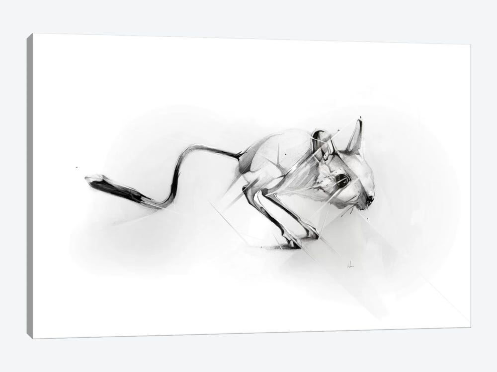 Egyptian Jerboa by Alexis Marcou 1-piece Canvas Print