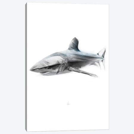 Shark I Canvas Print #AMU26} by Alexis Marcou Canvas Art