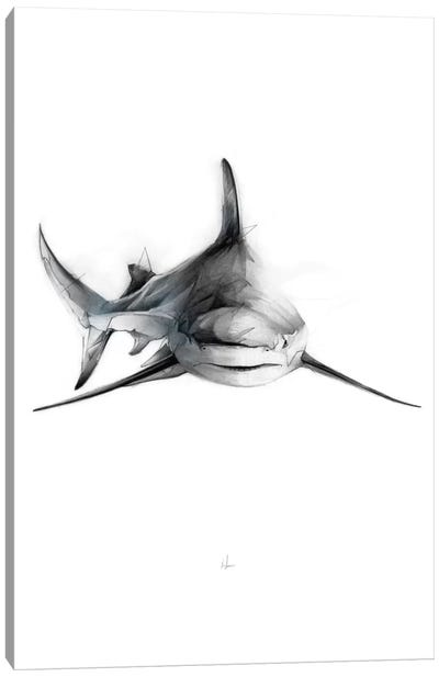 Shark II Canvas Print #AMU27
