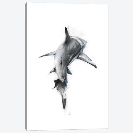 Shark III Canvas Print #AMU28} by Alexis Marcou Canvas Art Print
