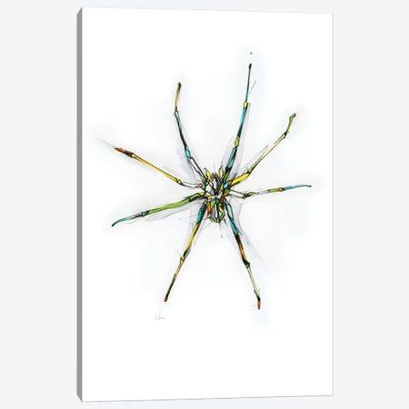 Spider Canvas Print #AMU32} by Alexis Marcou Canvas Wall Art