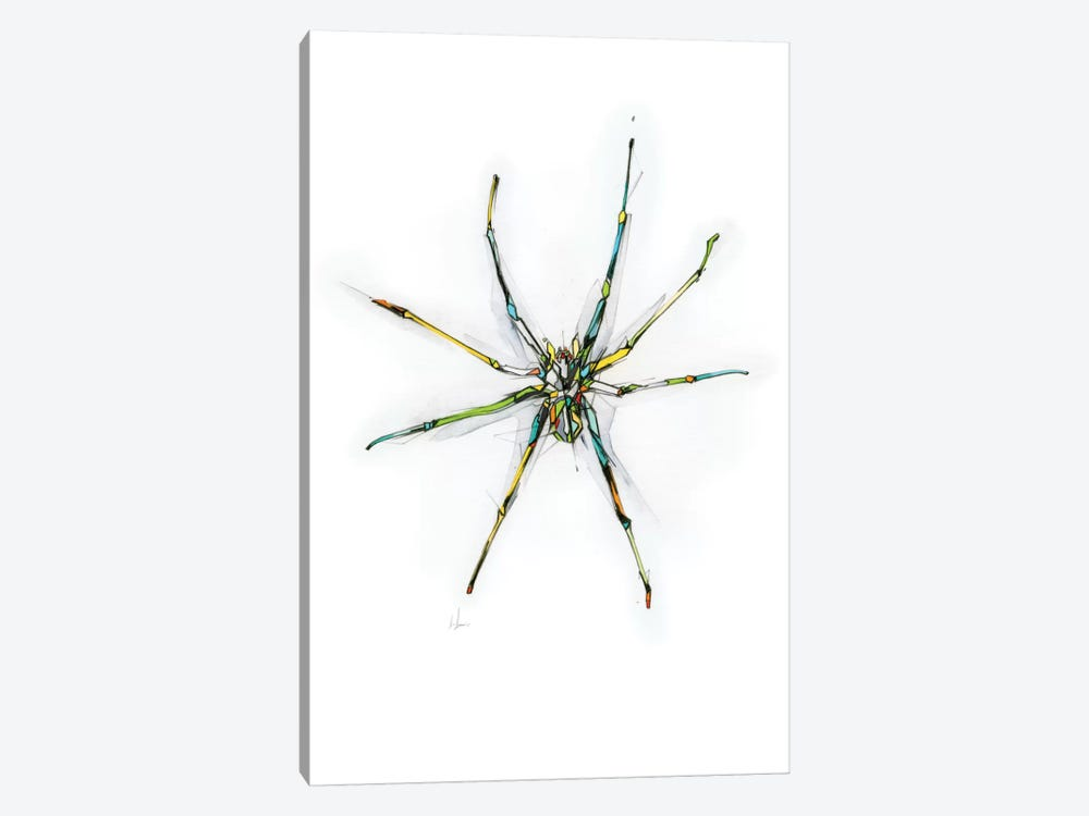 Spider by Alexis Marcou 1-piece Canvas Art Print