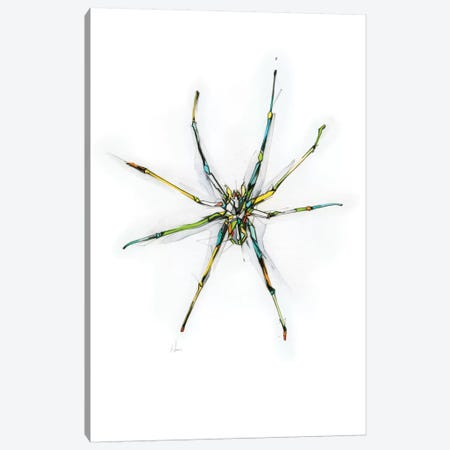 Spider Canvas Print #AMU32} by Alexis Marcou Canvas Wall Art