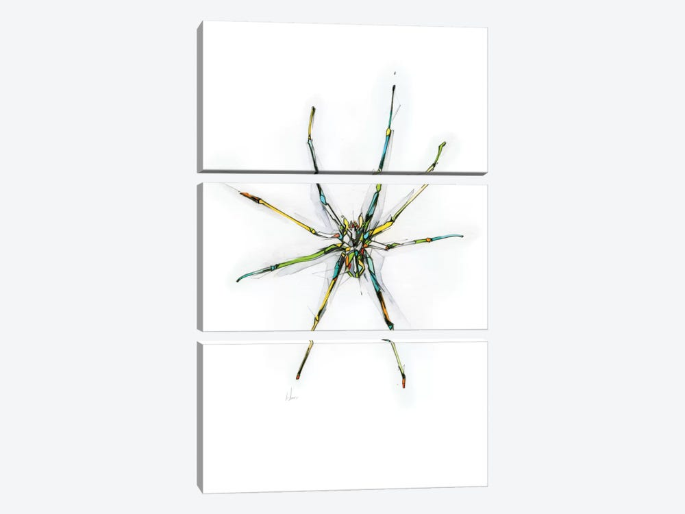 Spider by Alexis Marcou 3-piece Canvas Print