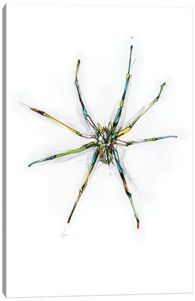 Spider Canvas Art Print