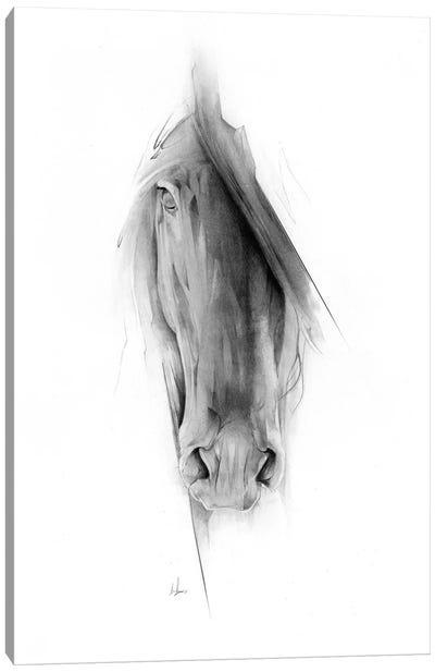 Horse 2023 Canvas Art Print