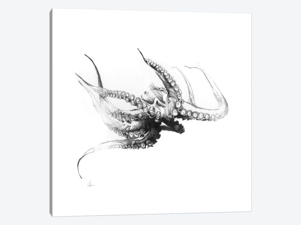 Octopus Rubescens by Alexis Marcou 1-piece Art Print