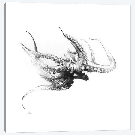 Octopus Rubescens Canvas Print #AMU47} by Alexis Marcou Canvas Artwork