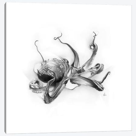 Pacific Octopus Canvas Print #AMU48} by Alexis Marcou Canvas Art Print