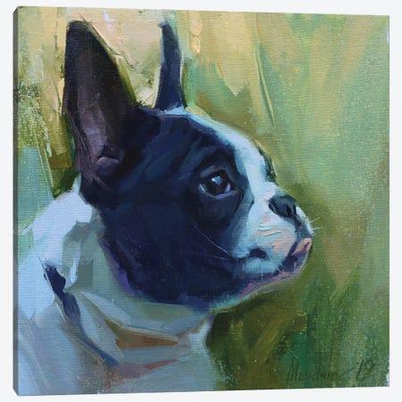 Bulldog Canvas Print #AMV10} by Alex Movchun Canvas Art Print