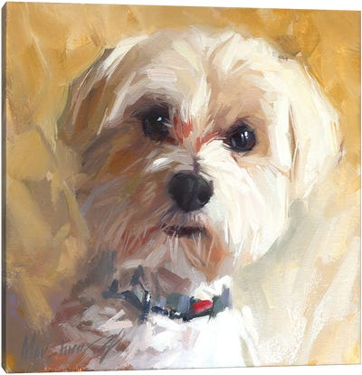 Little Dog Canvas Art Print