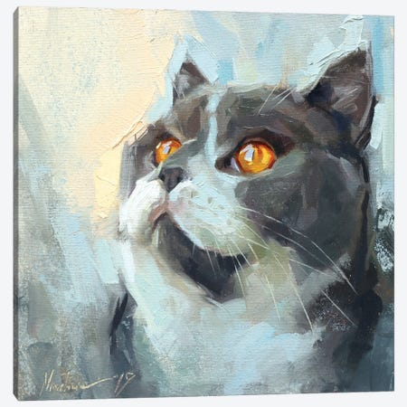 Gray Cat Canvas Print #AMV26} by Alex Movchun Canvas Print