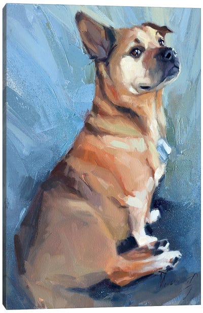 A Little Proud Dog Canvas Art Print