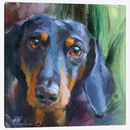 Dachshund Canvas Print #AMV5} by Alex Movchun Canvas Art Print