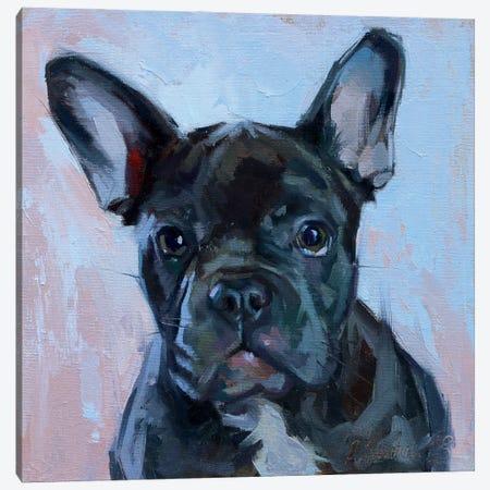 Black Bulldog Canvas Print #AMV8} by Alex Movchun Canvas Artwork