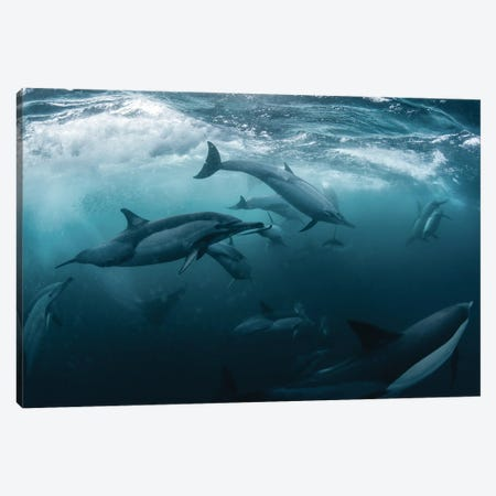 Dolphine Run 3-Piece Canvas #ANA4} by Andrey Narchuk Canvas Wall Art