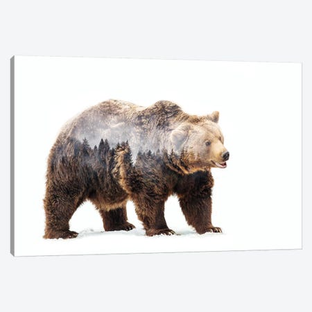 Bear Canvas Print #ANB2} by Angyalosi Beáta Canvas Wall Art