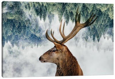 The Deer And The Woods Canvas Art Print
