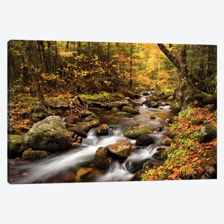 USA, New Hampshire, White Mountains, Fall color on Jefferson Brook I Canvas Print #ANC13} by Ann Collins Canvas Artwork