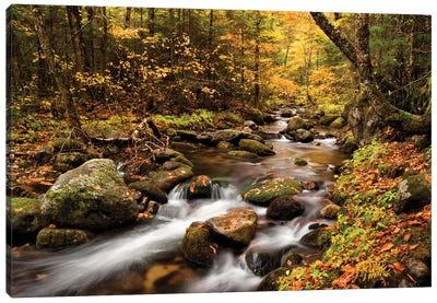 USA, New Hampshire, White Mountains, Fall color on Jefferson Brook I Canvas Art Print