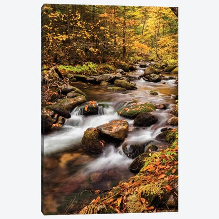 USA, New Hampshire, White Mountains, Fall color on Jefferson Brook II Canvas Print #ANC14} by Ann Collins Canvas Art Print