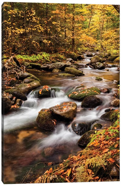 USA, New Hampshire, White Mountains, Fall color on Jefferson Brook II Canvas Art Print