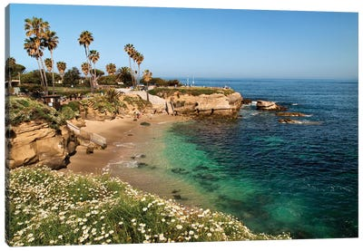 USA, California, La Jolla, Clear water on a spring day at La Jolla Cove Canvas Art Print