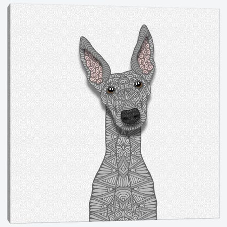 Blue Greyhound Canvas Print #ANG115} by Angelika Parker Art Print