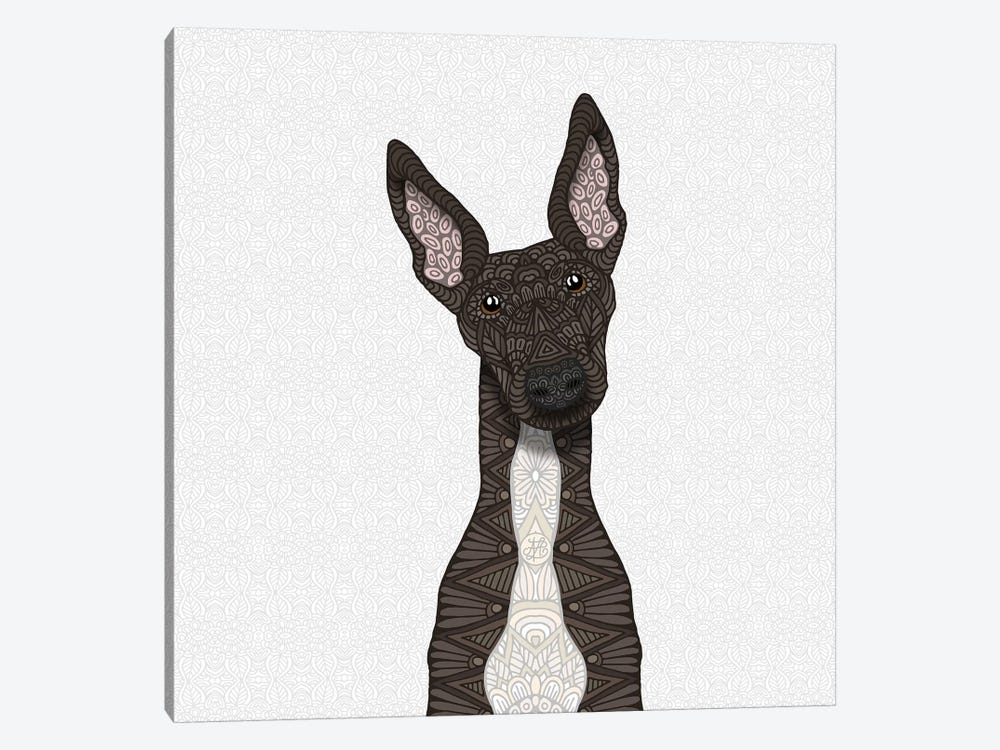Brindle Greyhound, White Belly by Angelika Parker 1-piece Canvas Art
