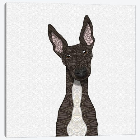 Brindle Greyhound, White Belly Canvas Print #ANG124} by Angelika Parker Canvas Artwork