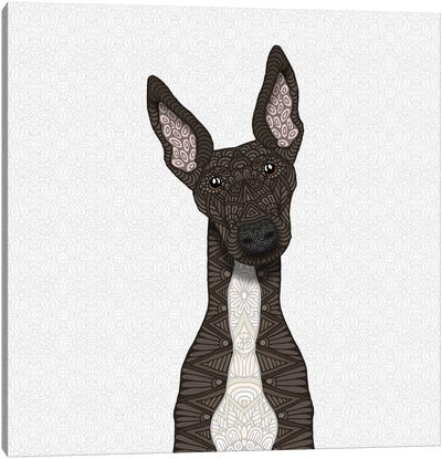 Brindle Greyhound, White Belly Canvas Art Print