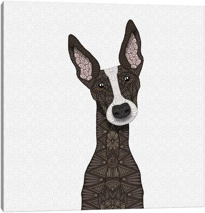 Brindle Greyhound, White Snout Canvas Art Print