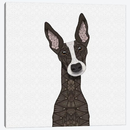 Brindle Greyhound, White Snout Canvas Print #ANG125} by Angelika Parker Canvas Art