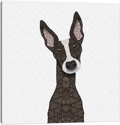 Brindle Greyhound, White Snout Canvas Art Print