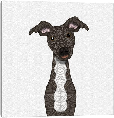 Brindle Iggy, White Belly Canvas Art Print