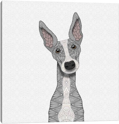 Cute Blue Greyhound Canvas Art Print