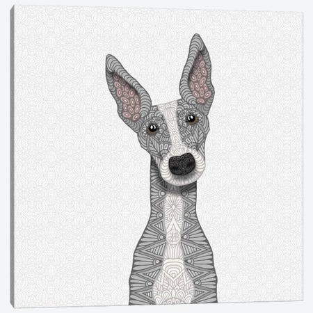 Cute Blue Greyhound Canvas Print #ANG132} by Angelika Parker Canvas Wall Art
