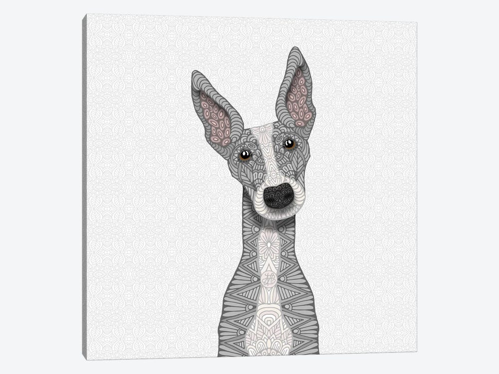 Cute Blue Greyhound by Angelika Parker 1-piece Canvas Print
