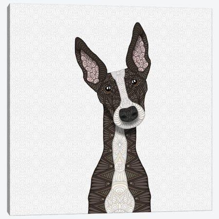 Cute Brindle Greyhound Canvas Print #ANG135} by Angelika Parker Canvas Art Print