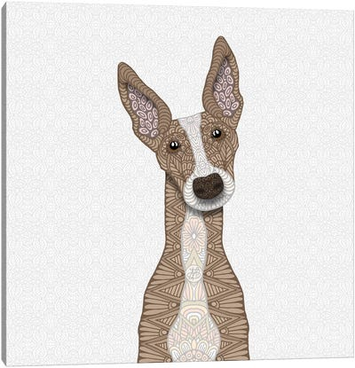 Cute Fawn Greyhound Canvas Art Print