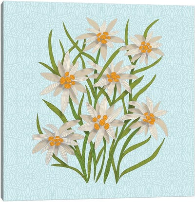 Edelweiss Canvas Art Print