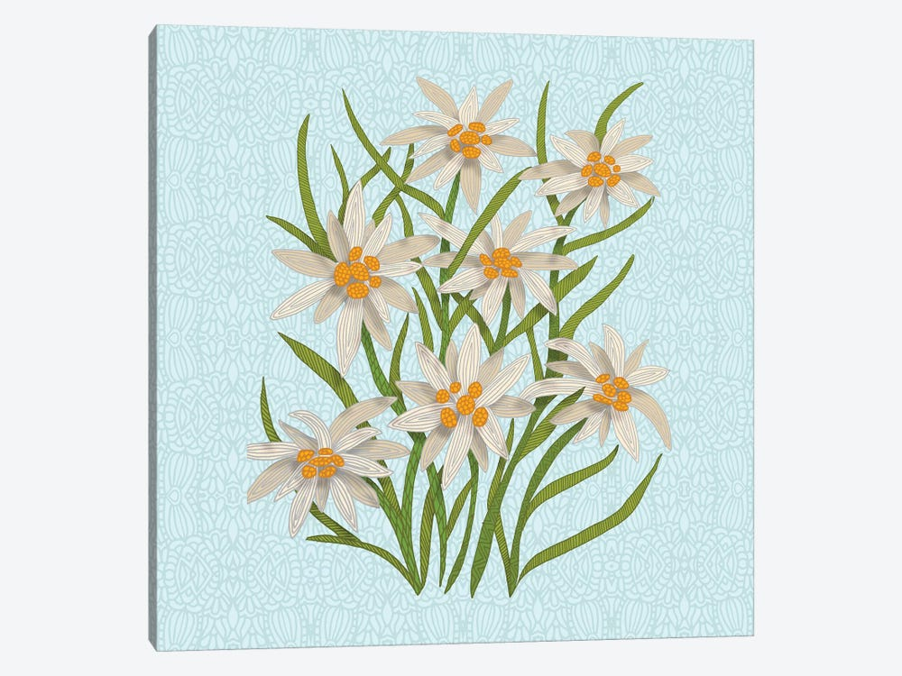 Edelweiss by Angelika Parker 1-piece Canvas Print
