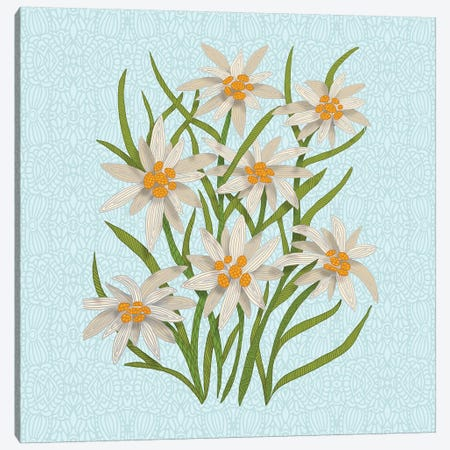 Edelweiss Canvas Print #ANG145} by Angelika Parker Canvas Artwork