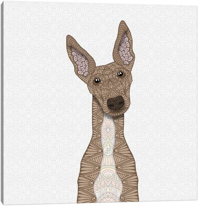 Fawn Greyhound, White Belly Canvas Art Print