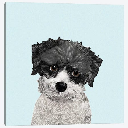 Little Havanese Canvas Print #ANG162} by Angelika Parker Canvas Print