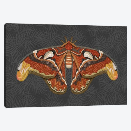 Atlas Moth - Dark Canvas Print #ANG200} by Angelika Parker Canvas Art