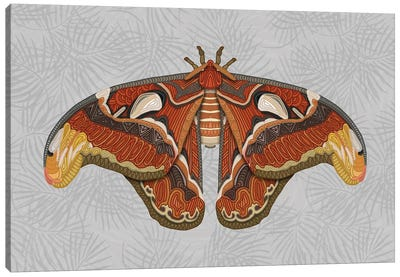 Atlas Moth - Light by Angelika Parker Canvas Art Print